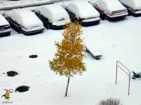 27 октября 2012 года в Гродно пришла зима.